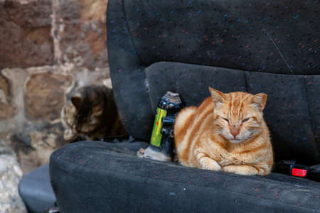 Street cats relaxing on a car seat in the Old City of Akko. Taken in Acre, Israel.