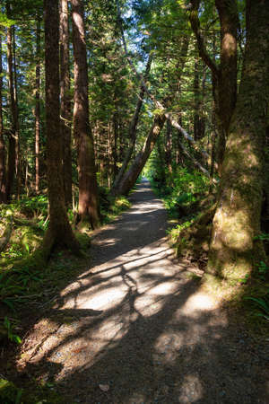 Beautiful path in the woods. Taken in Cape Scott Provincial Park, Northern Vancouver Island, BC, Canada. Stock fotó