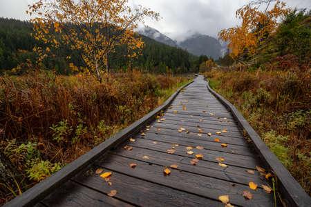 Pemberton, British Columbia, Canada. Beautiful view of a wooden path at One Mile Lake Park during Autumn Season.