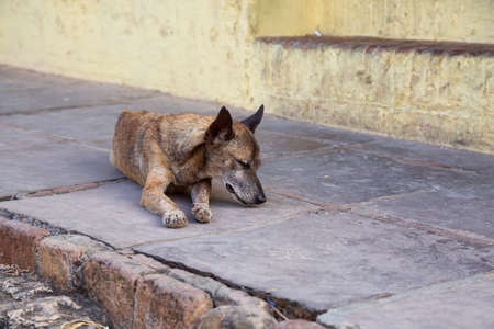 Poor, unwanted, homeless dog in the Streets of Old City of Trinidad, Cuba, during a sunny day.