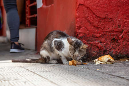 Dirty, homeless cat is eating left over food in the Streets of Old Havana City, Capital of Cuba, during a sunny day. Фото со стока