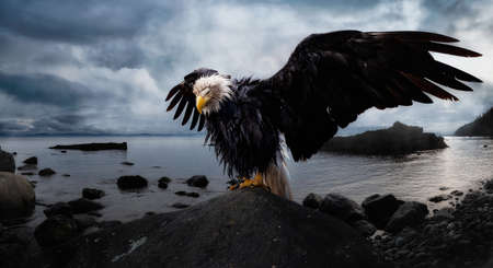 Bald Eagle sitting on a rock with Wings Wide Open on the Pacific Ocean Coast during a dramatic cloudy evening. Composite. Landscape from Vancouver Island, British Columbia, Canada. Stock Photo