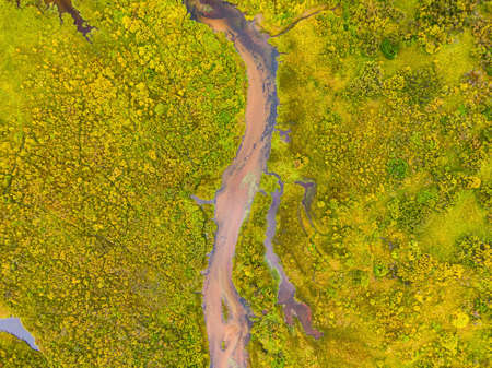 Aerial view of colorful pond in the marshlands during a summer day.