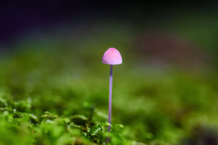 Close up image of a mushroom on the tree during fall season. Taken in Squamish, British Columbia, Canada. 版權商用圖片