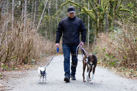 Man walking dogs on the hiking trail in the neighborhood park. Taken in Surrey, Greater Vancouver, British Columbia, Canada.