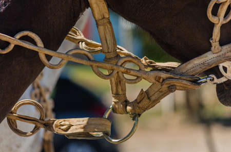 leather horse reins Stock Photo