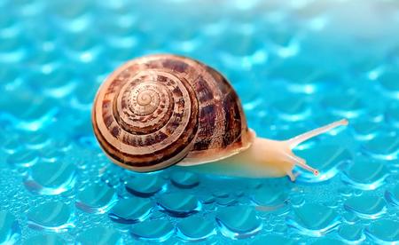 slug on the war of waterdrops on the backside Stock fotó