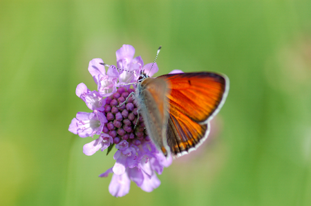 butterfly in closeup photo with macro lenses Stock Photo