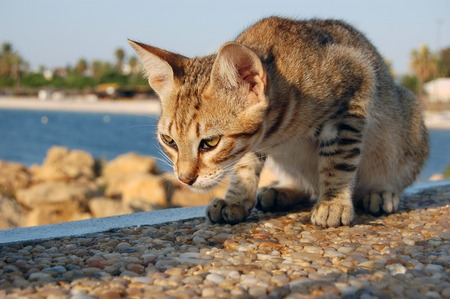 Cat plays on a stone wall close up in Tunisia