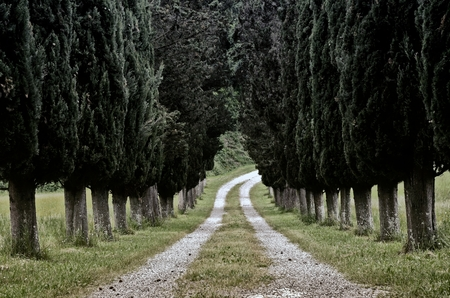 Photo of Cypress tree road a way Tuscany Lari Stock Photo