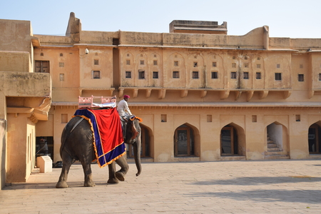 amber fort: Indian man on an elephant inside Amber Fort in Jaipur, Rajasthan, India Editorial