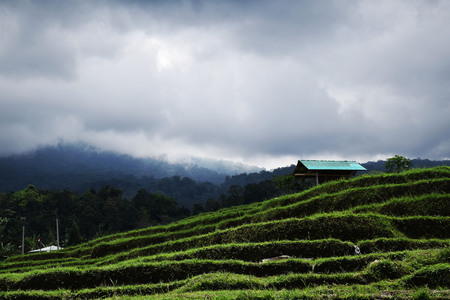 The amazing landscape in Jatiluwih rice terraces in Bali, Indonesia Stock Photo