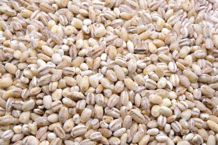 pearl barley: Many pearl barley macro close up background