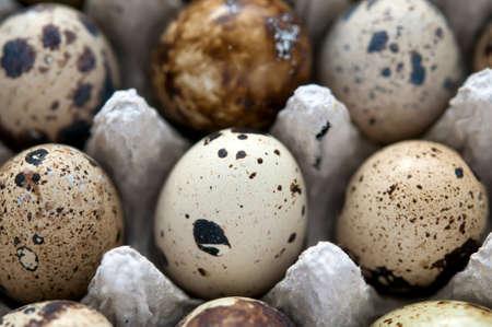 huevos de codorniz: Huevos de codorniz fotograma completo, macro y close-up