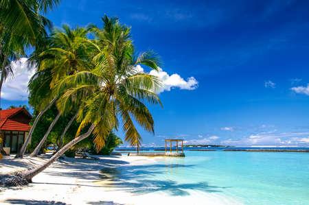 island paradise: Green palm tree at white sand beach on tropical paradise island Stock Photo