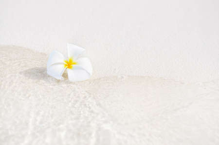 One single alone plumeria flower on white sand beach with sea wave line, Maldives