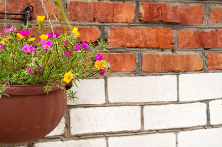Hanging basket of colorful flowers with brick wall background