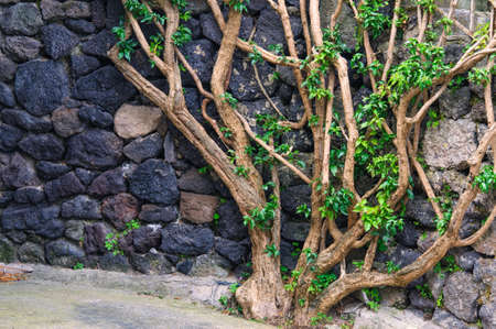 meterial: Stone wall with curvy branches and green leaves