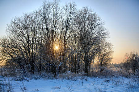 many branches: Trees with many branches at sunset in winter Stock Photo