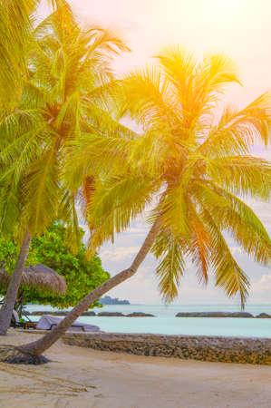 Tropical Maldives beach
