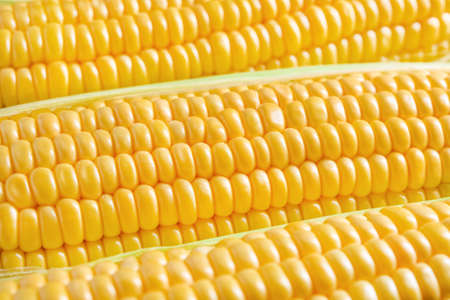 Three corn ears with green leaves close up Stock Photo