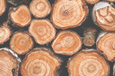 Cross section of many tree trunks. Matte colors