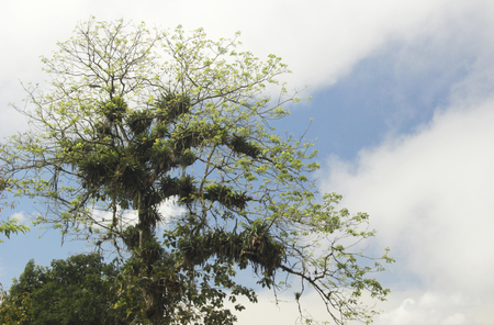 Epiphyte plants growing in a tree rainforest Venezuela 写真素材