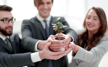 close up.young shoots in the hands of a businessman