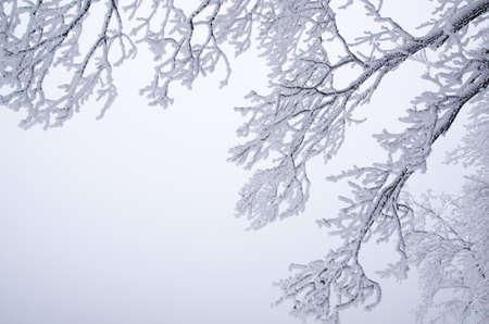 Frozen branches photo