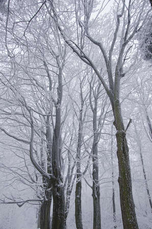 Frozen forest photo