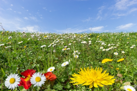 A wonderful spring day in an idyllic landscape with a flowery meadow