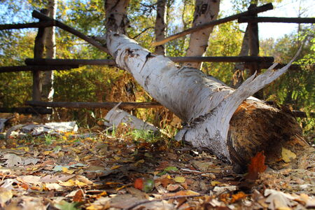 palisade: A fallen trunk breaking a fence Stock Photo