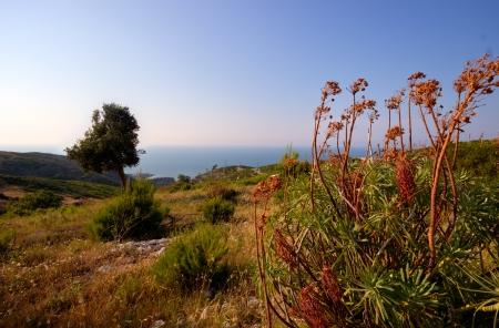 A marine landscape at Zaiana beach, near Peschici, a small turistic village on the Adriatic Sea of Gargano peninsula in Puglia, Italy