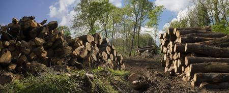 Ein Waldweg mit viel gehacktem Holz an den Seiten in einem klaren, sonnigen Tag Standard-Bild - 36478821