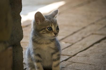 A little, cute kitten is looking around as a guardian.