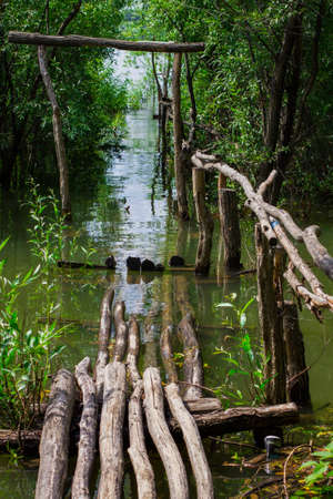 travelled: wooden bridge in the jungle in the water Stock Photo