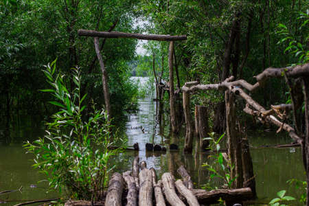 wooden bridge in the jungle in the water Stock Photo