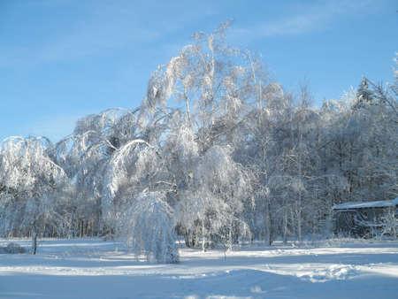 Hoarfrost on a sunny winter day Stock Photo - 8770921