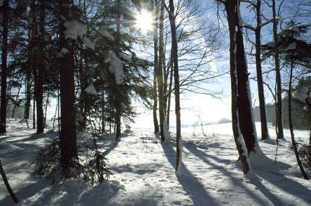 Winter sun Stock Photo - 8770903