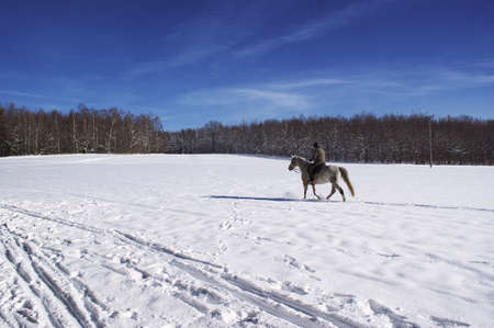 Horse and rider on snow-covered field Stock Photo - 8770897