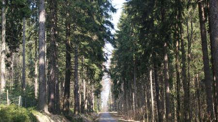 erzgebirge: Forest road in the Erzgebirge
