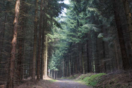 erzgebirge: A flooded with light forest path