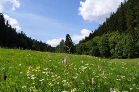 erzgebirge: Summer meadow in the Erzgebirge