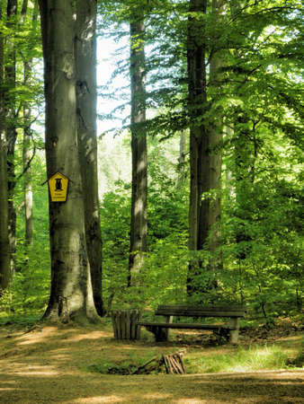 A bench in the beech forest; its a sunny day in the spring photo