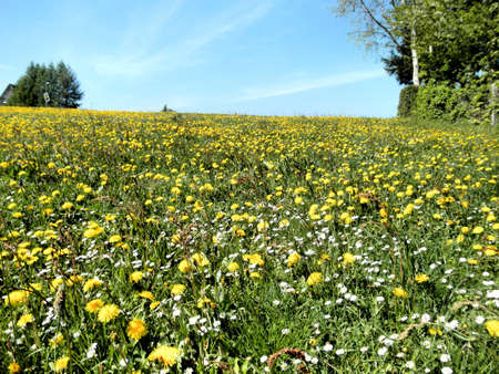 Flowers meadow and blue sky in spring