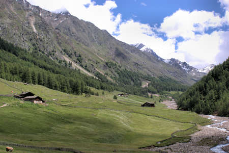river bed: Pastures in the Pfossental; grazing cow, mountain huts, a dried up river bed, blue sky and white clouds;  the Pfossental is a idyllic valley in the Texel Group Nature Park in South Tyrol, Italy