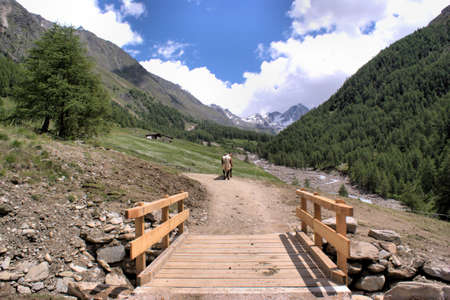 A small wooden bridge in Pfossental in South Tyrol, a cow and snow-capped  mountains, blue sky and white clouds photo