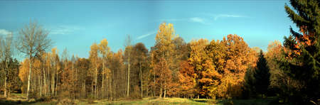 Autumn panorama. Colorful deciduos trees and blue sky; panorama picture photo