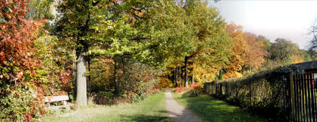 A bench at the edge of the forest, sunny day in autumn, colorful trees and a narrow path Stock Photo - 11367427