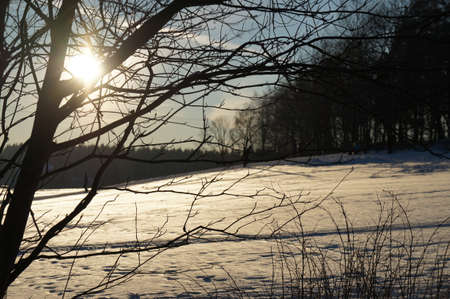Winter sun; against the sun, woods and bare trees in a winter landscape photo